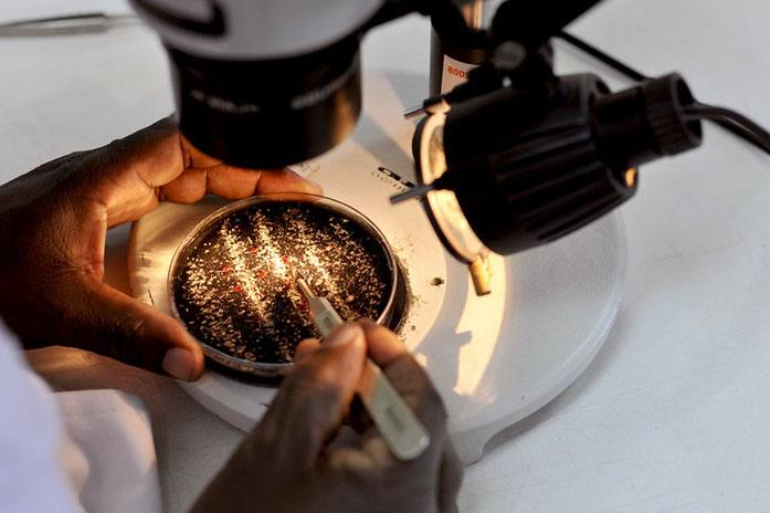 Scientist making research under a microscope